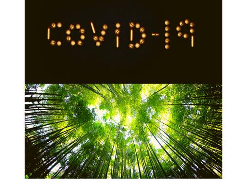 La verdadera relación entre Covid-19 y Cambio Climatico