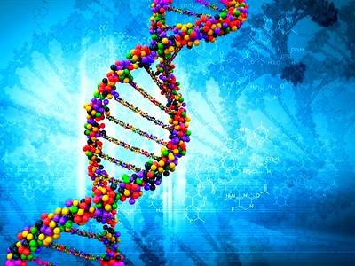 Генетика наше все.