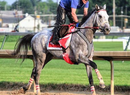 5 Famous Grey Racehorses