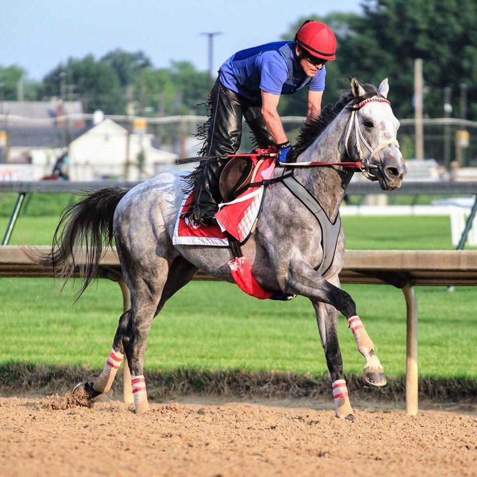famous grey racehorses