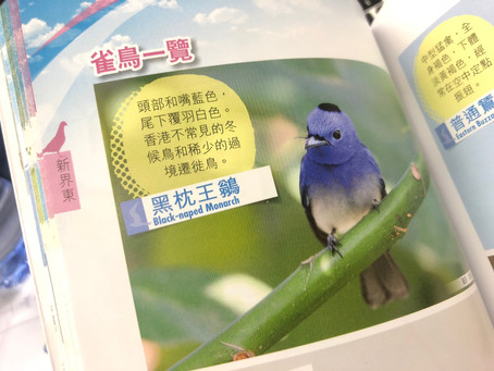 香港觀鳥地圖