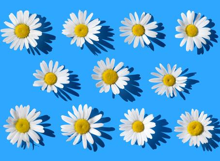 Soaking Up Spring | Fresh as a Daisy
