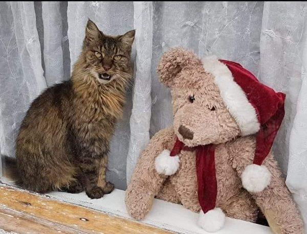 我說貓語,它說熊語,能幫忙找個翻譯嗎。