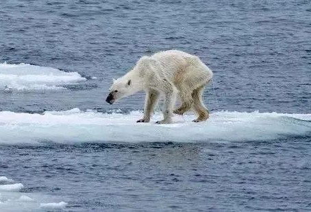 The Arctic Fever: Why Should We Care?