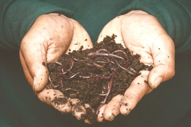 Handen gevuld met compost en wormen.