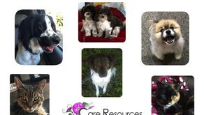 Pet Trust Primer