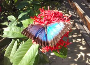 De visita a la granja de mariposas - Aruba