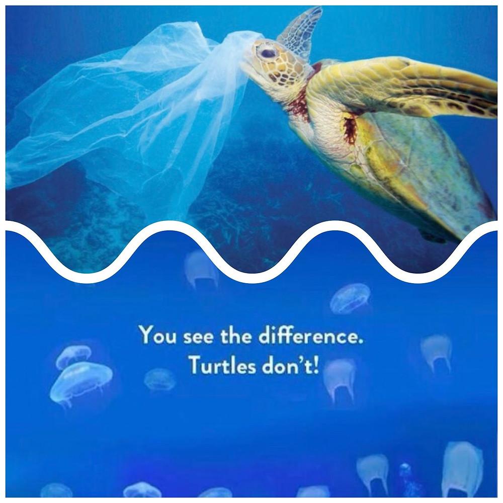 Plastic bags jellyfish