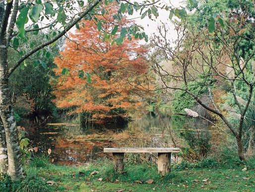 A magical Autumnal wonderland