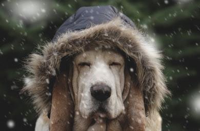Image result for cold dog