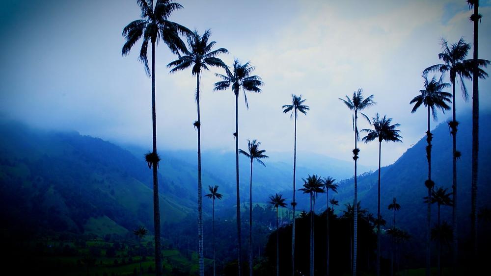 Le panorama, Vallée de Cocora, Colombie