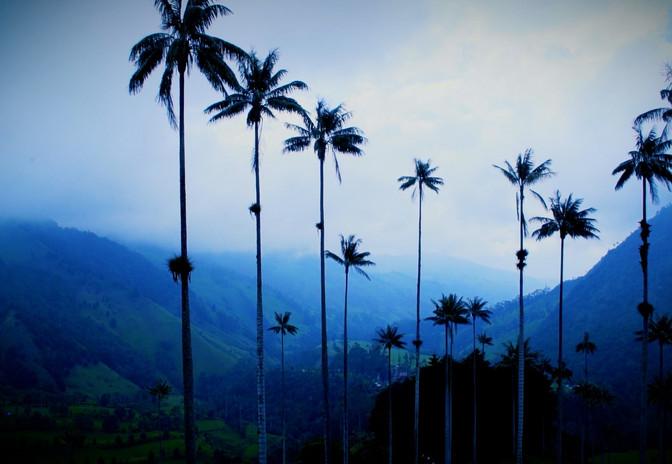 Vallée de Cocora, Colombie, AURORA