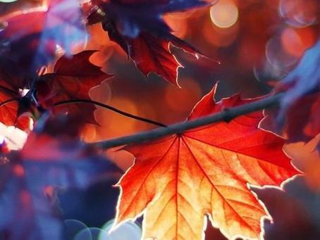秋の知らせ
