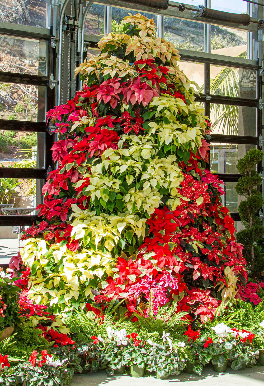 San Diego Botanic Gardens Garden of Lights Best Top Holiday Christmas events activities list guide for families kids are still happening in San Diego December 2020 what to do this year