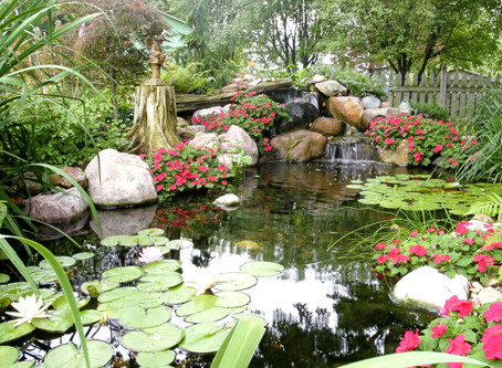 What Is An Ecosystem Koi Pond?