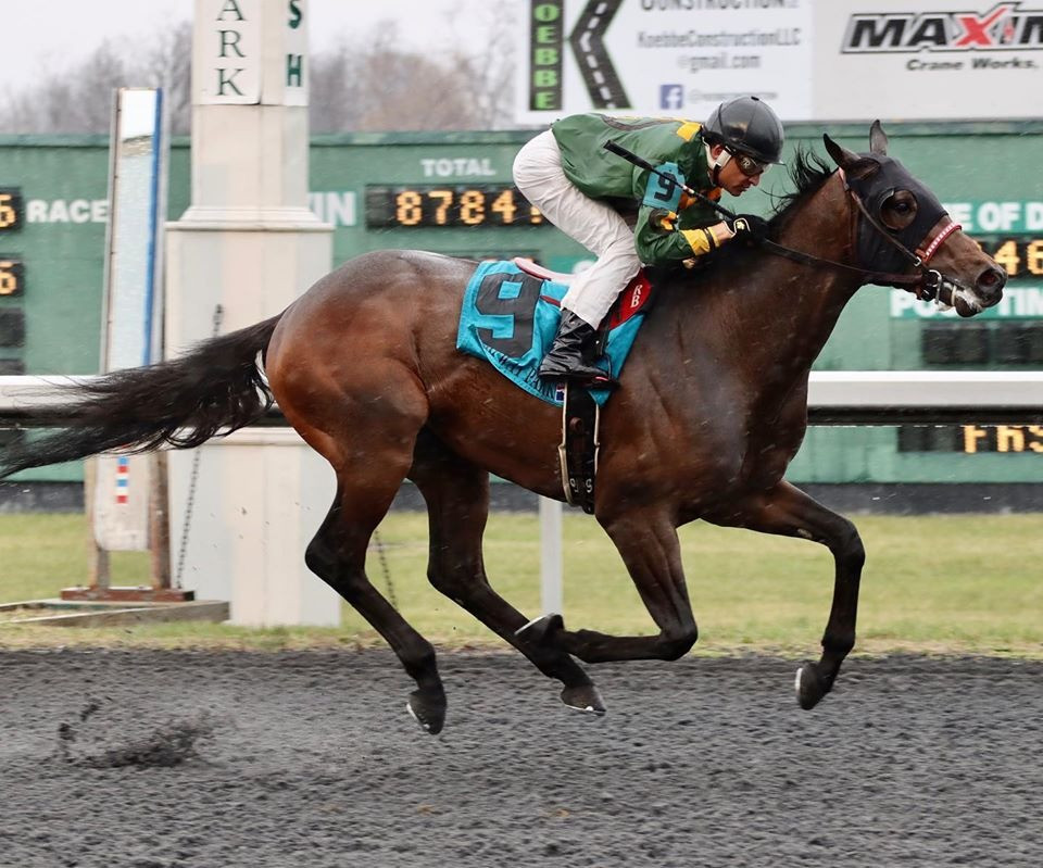 Bango wins the Animal Kingdom Stakes at Turfway Park in track record time.