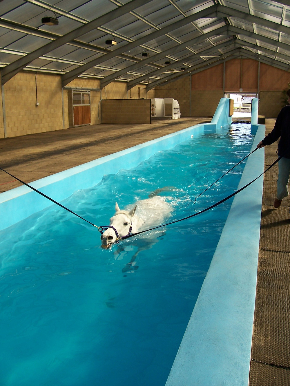 Hydrotherapy for horses