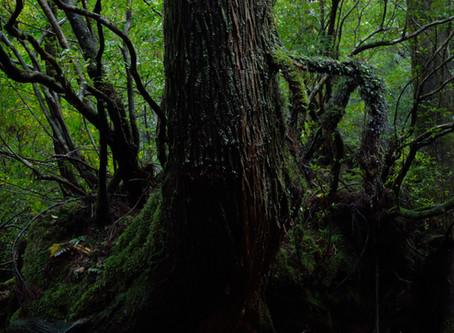 良くある質問①「縄文杉と白谷雲水峡どっちが良いの?」