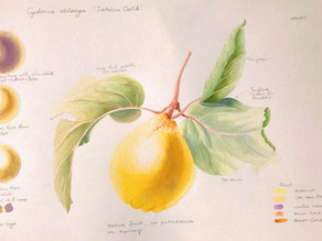 """""""Painting Picnic in the Orchard"""" - RHS Wisley - Saturday 21st September"""