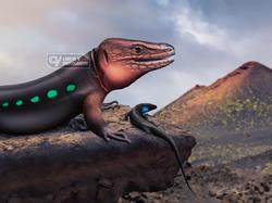 La Palma lizards