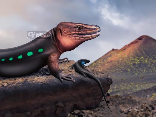 La Palma lizards (2019-20)