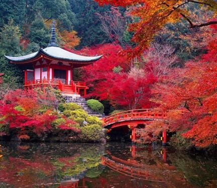 La visite des Jardins Zen au Japon