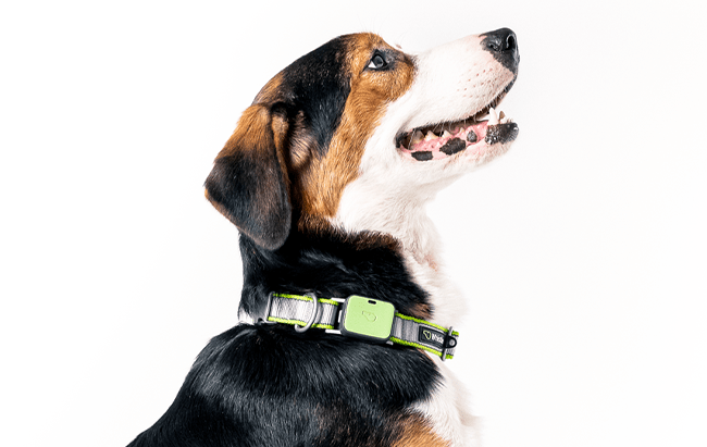 Whistle Go Explore – The Most Complete GPS Dog Tracker