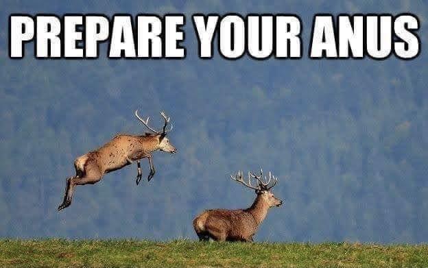 Prepare Your Anus Deer Buck Meme