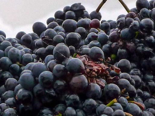 Barbaresco wijn