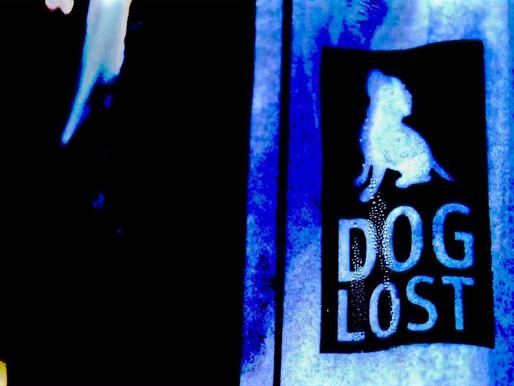 Black dog lost #MentalhealthAwareness
