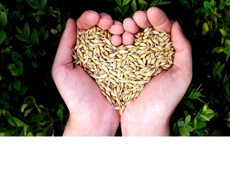 Sowing the Seeds of the Spirit through Love!