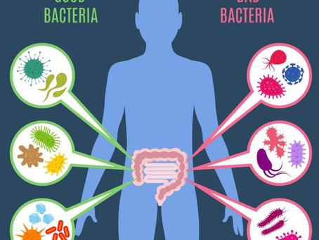 O intestino e a vida saudável