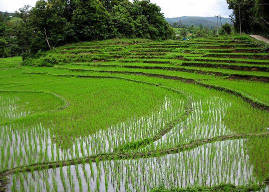 ASEAN กับข้อกีดกันการค้าทางการเกษตรในภูมิภาค