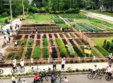 Why growing food in cities goes far beyond calorific value.