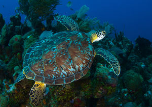 Come Shellebrate World Turtle Day With Us!