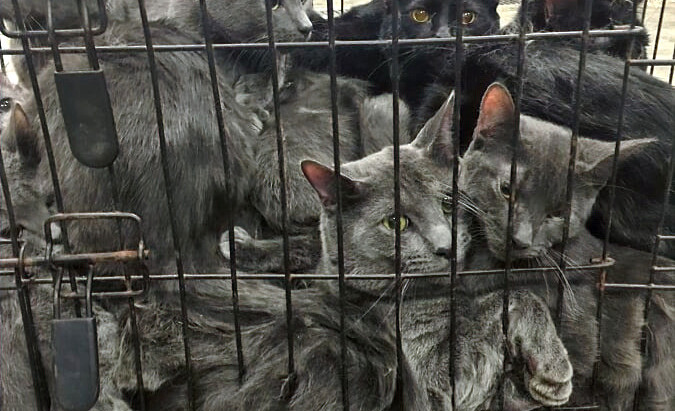 KCASE Takes in 33 Cats Overnight
