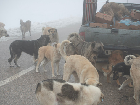 Things You Can Do to Help Stray Dogs in your Community