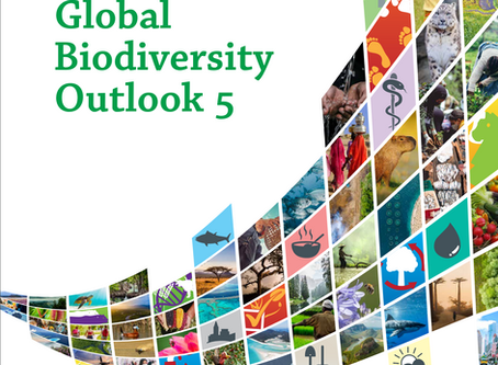 UN: The world has failed to meet a single target to stem ecosystem destruction.