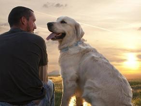 #Edublog:  chi è il nostro cane e cosa ci comunica?