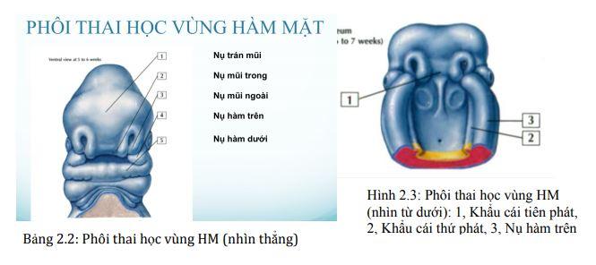 , Công ty Anh & Em | J. Morita Việt Nam