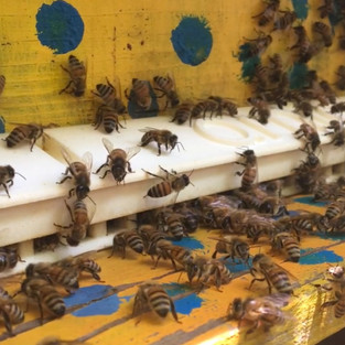 The Honey Bee Welfare Challenge