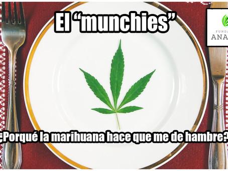 "El ""munchies"" ¿Porqué la marihuana hace que me de hambre?"