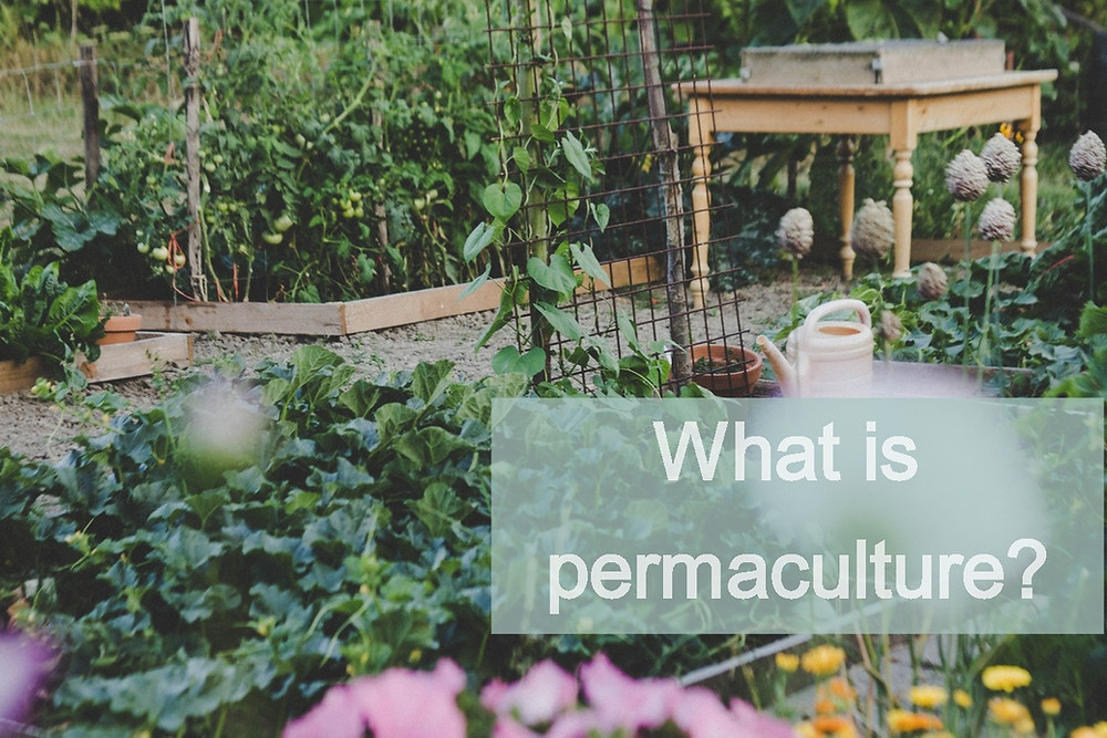 Permaculture garden - what is permaculture?