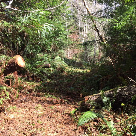 Trail Clearing Sunday