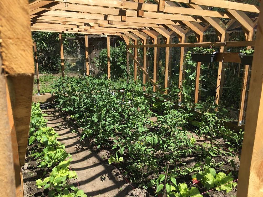 permaculture tomate serre bois Helio Lancelot