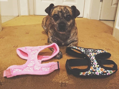 Which Dog Collar or Dog Harness is best?... Decisions Decisions...