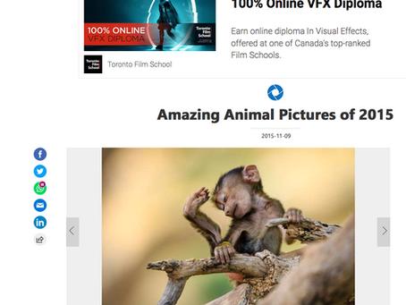 La fois où MSN a inclus mon image parmi les photos animalières de l'année (2015)!