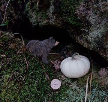 Grandmother Bears Samhain Offering