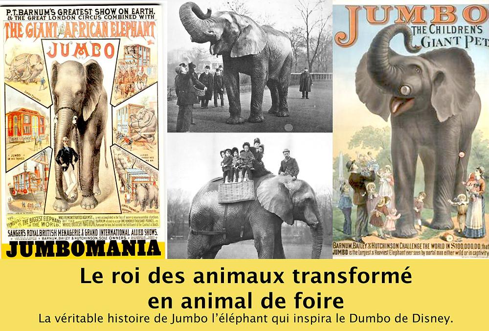 Destin tragique de Jumbo l'éléphant