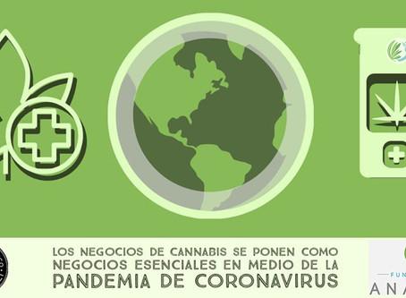 Dispensarios de cannabis entre negocios esenciales abiertos durante la pandemia Covid-19